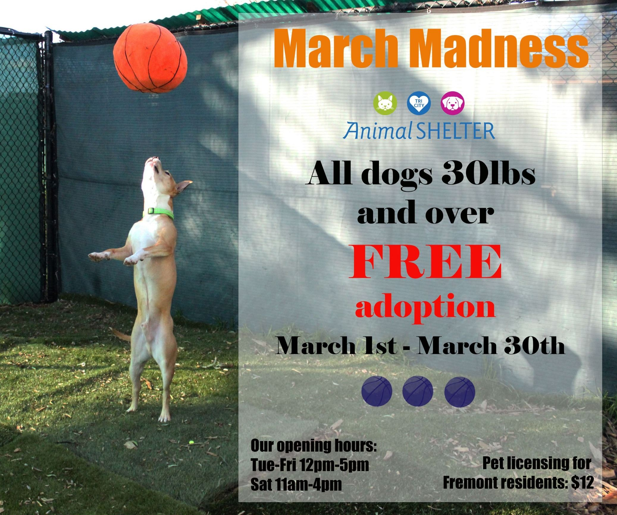 Dog March Madness