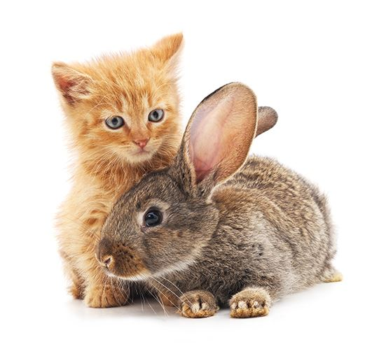 Kitten and Bunny