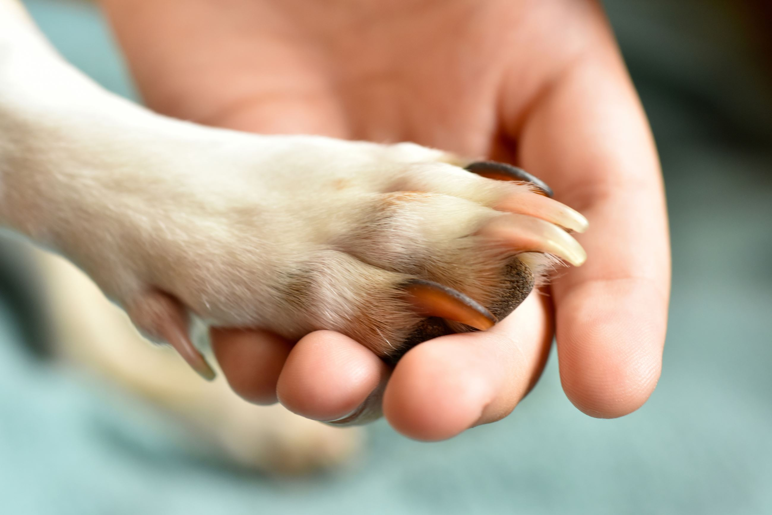 A dog paw being held by a person's hand