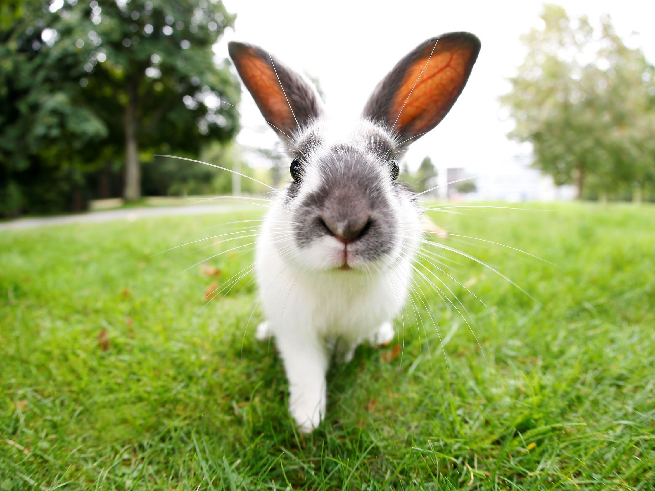 Rabbit outside on grass